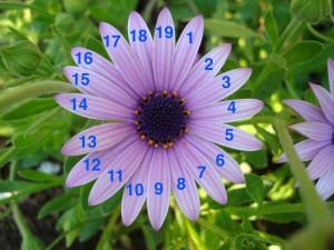 flor-19